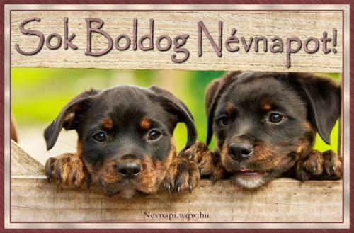 Rottweiler kutyák, kutyás névnapi kép